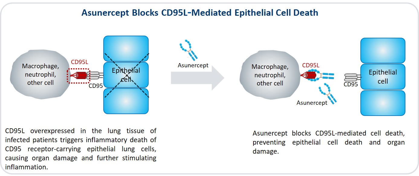 Image of Epithelial Cell Death